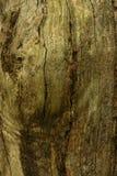 Ciérrese para arriba de tronco de árbol Foto de archivo libre de regalías
