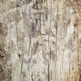 Ciérrese para arriba de tronco de árbol muerto Foto de archivo