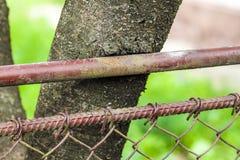 Ciérrese para arriba de tronco de un árbol dañado por la cerca del metal Fotografía de archivo libre de regalías