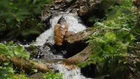 Ciérrese para arriba de umbral de la cascada en el parque del medelikha almacen de video