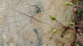 Ciérrese para arriba de un árbol del corte almacen de video