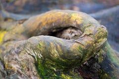 Ciérrese para arriba de un árbol muerto que pone en la tierra Imagen de archivo