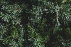 Ciérrese para arriba de un árbol de navidad Fotografía de archivo