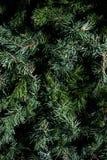 Ciérrese para arriba de un árbol de navidad Foto de archivo
