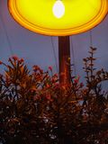 Ciérrese para arriba de un arbusto floreciente de la flor roja debajo de una lámpara encendida anaranjada de la ciudad en la noch imágenes de archivo libres de regalías