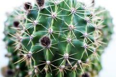 Ciérrese para arriba de un cactus Fotos de archivo