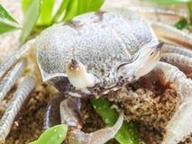 Ciérrese para arriba de un cangrejo Imagenes de archivo