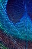 Detalle de la pluma del pavo real Fotos de archivo