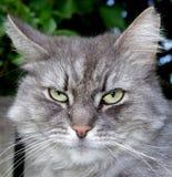 Ciérrese para arriba de un gato Imagenes de archivo