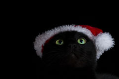 Ciérrese para arriba de un gato negro de ojos verdes con el sombrero de santa que mira para arriba Imagen de archivo libre de regalías