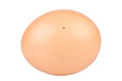 Ciérrese para arriba de un huevo Imágenes de archivo libres de regalías