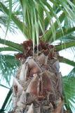 Ciérrese para arriba de un Palmtree Fondo de Holliday Verano Vacaciones Foto de archivo libre de regalías