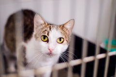 Ciérrese para arriba de un pequeño gato en jaula Imagen de archivo