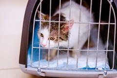 Ciérrese para arriba de un pequeño gato en jaula Fotografía de archivo