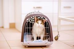 Ciérrese para arriba de un pequeño gato en jaula Fotos de archivo libres de regalías