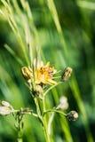 Ciérrese para arriba de una abeja ocupada que recoge la miel Fotografía de archivo