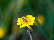 Ciérrese para arriba de una araña Imagen de archivo libre de regalías
