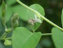 Ciérrese para arriba de una araña en una hoja fotos de archivo libres de regalías