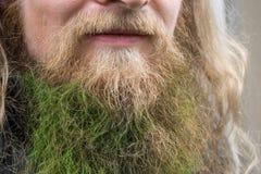 Ciérrese para arriba de una barba coloreada verde, carnaval en Colonia, Alemania imagenes de archivo