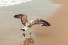 Ciérrese para arriba de una gaviota en la playa Fotografía de archivo