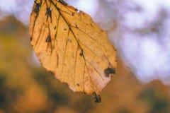 Ciérrese para arriba de una hoja amarilla Foto de archivo