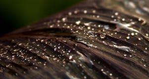 Ciérrese para arriba de una hoja mojada exótica fotografía de archivo libre de regalías
