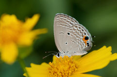 Ciérrese para arriba de una mariposa Fotos de archivo libres de regalías