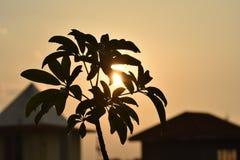 Ciérrese para arriba de una planta con la luz del sol fotografía de archivo libre de regalías