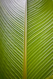 Ciérrese para arriba de una planta grande del helecho Imágenes de archivo libres de regalías