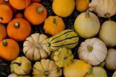 Ciérrese para arriba de verduras de las calabazas Fotografía de archivo