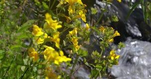 Ciérrese para arriba de wildflowers que soplan en el río 4k 24fps almacen de video