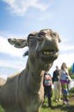 Ciérrese para arriba del bozal de un burro, al aire libre Imagenes de archivo
