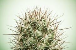 Ciérrese para arriba del cactus Fotografía de archivo libre de regalías