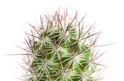 Ciérrese para arriba del cactus Foto de archivo libre de regalías