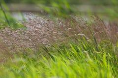 Ciérrese para arriba del campo de la hierba Imagen de archivo libre de regalías