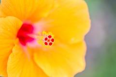 Ciérrese para arriba del carpelo de la flor Fotos de archivo libres de regalías