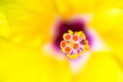 Ciérrese para arriba del carpelo de la flor Imagen de archivo libre de regalías