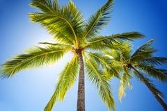 Ciérrese para arriba del cielo asoleado de los agains de las palmeras Fotografía de archivo libre de regalías