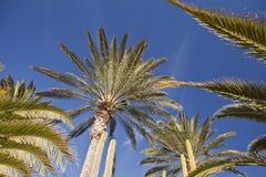 Ciérrese para arriba del cielo asoleado de los agains de las palmeras Imagen de archivo libre de regalías