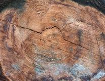 Ciérrese para arriba del corte transversal del árbol fotografía de archivo