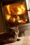 Ciérrese para arriba del gato que se relaja por el fuego de registro acogedor Foto de archivo libre de regalías
