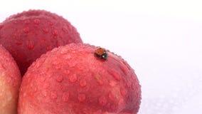 Ciérrese para arriba del insecto de la señora que sube en la nectarina fresca aislada en el fondo blanco Concepto de productos de metrajes