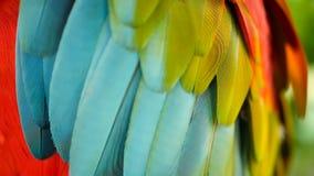 Ciérrese para arriba del loro o del Ara rojo Macao del Macaw del escarlata del Amazonas, en el retrato colorido de la selva de la metrajes