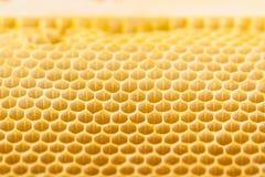 Ciérrese para arriba del nuevo peine natural de la abeja de la miel Imagen de archivo libre de regalías