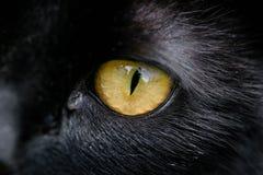 Ciérrese para arriba del ojo amarillo de un gato Foto de archivo
