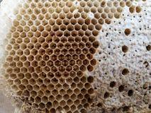Ciérrese para arriba del panal en naturaleza después de las abejas con hojas Foto de archivo libre de regalías