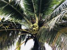 Ciérrese para arriba del papel pintado del árbol de coco imagenes de archivo