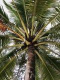 Ciérrese para arriba del papel pintado del árbol de coco imagen de archivo libre de regalías