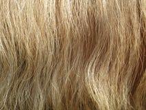 Ciérrese para arriba del pelo del caballo Foto de archivo