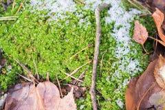 Ciérrese para arriba del piso del bosque Foto de archivo